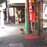 商店街を散歩する動物達