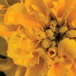 【終了】福山沙織 写真展「色色」