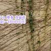 【終了】トリエノマド2016 in 博多冷泉荘