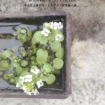 【終了】ベランダカフェ(テトラグラフ写真室)【れいぜん荘ピクニック2017・春】