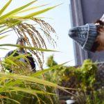 【終了】初収穫!稲刈り@冷泉荘&持ち寄りカレーでお昼ご飯<たのしイネseason2第4回>