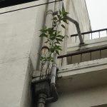 冷泉荘と植物