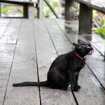 【終了】あひるなんちゃら関村個人企画in福岡 「猫は地球を見て美しいと思わないよ  と  ラグランジュブランチ」